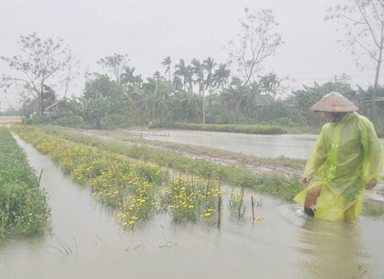 Thủ tục hỗ trợ thiệt hại sản xuất nông nghiệp do thiên tai, dịch bệnh