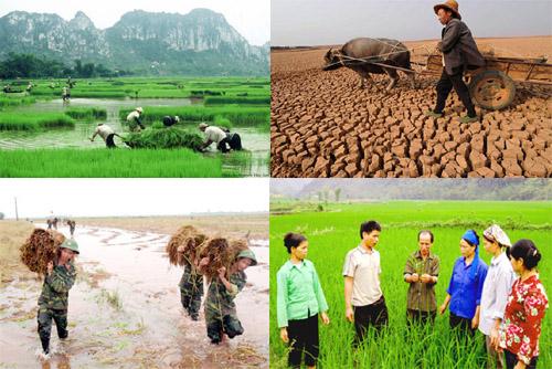 Bảo hiểm nông nghiệp là gì?