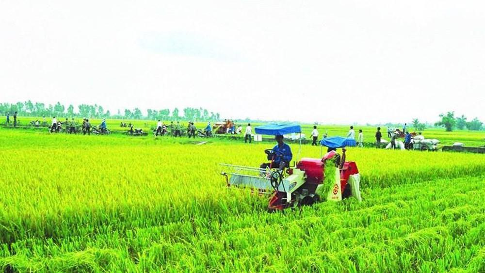 Nhà nước hỗ trợ phí bảo hiểm nông nghiệp cho hộ nghèo, cận nghèo đến 90% - Báo Đầu Tư Chứng Khoán