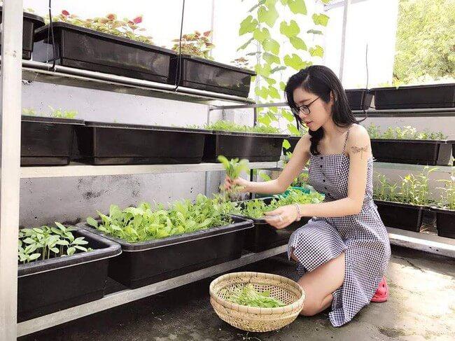 Cách tự làm giàn trồng rau sạch tại nhà cực đơn giản