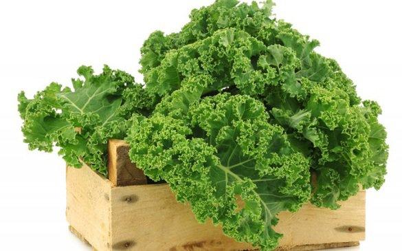 Rau cải xoăn rất giàu vitamin và chất xơ   Vinmec
